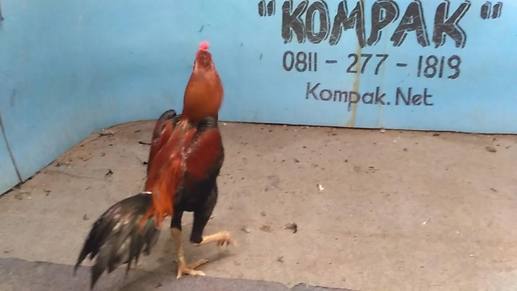 Ayam Bangkok Super Pukul Mati